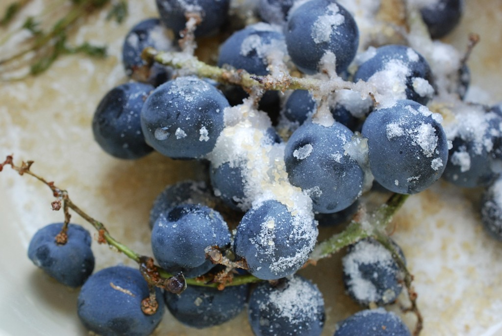 grapes covered in sugar