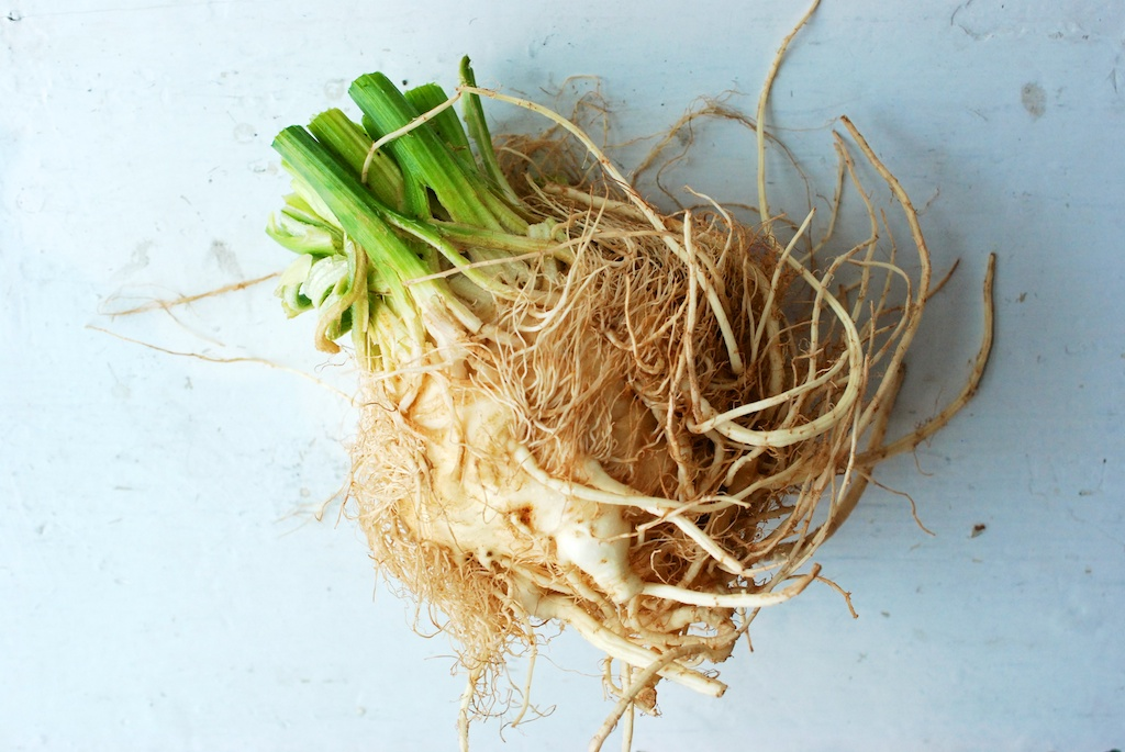 celery root