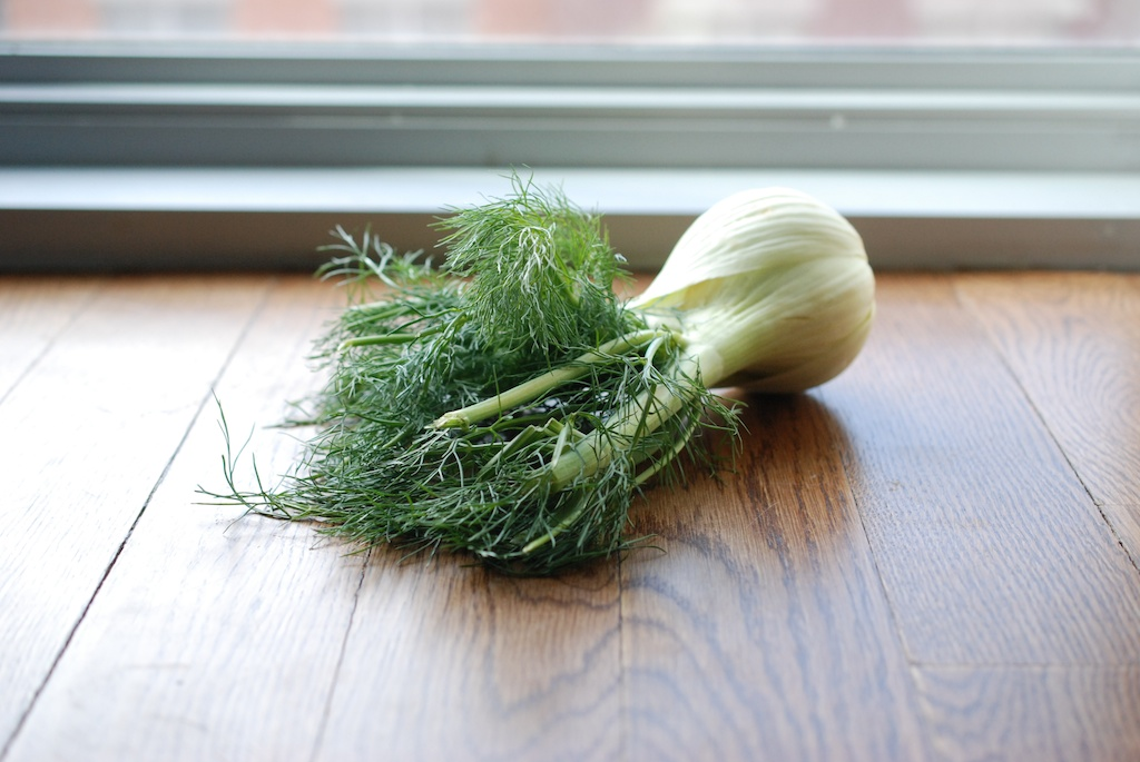 fennel bulb and fronds