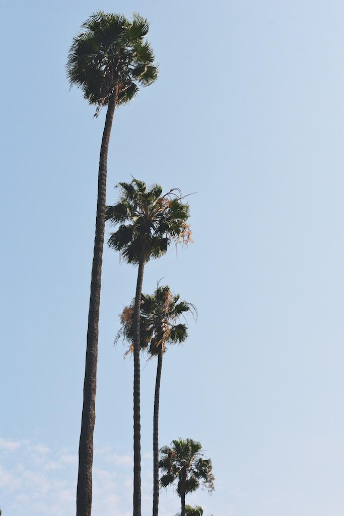 palm trees, LA