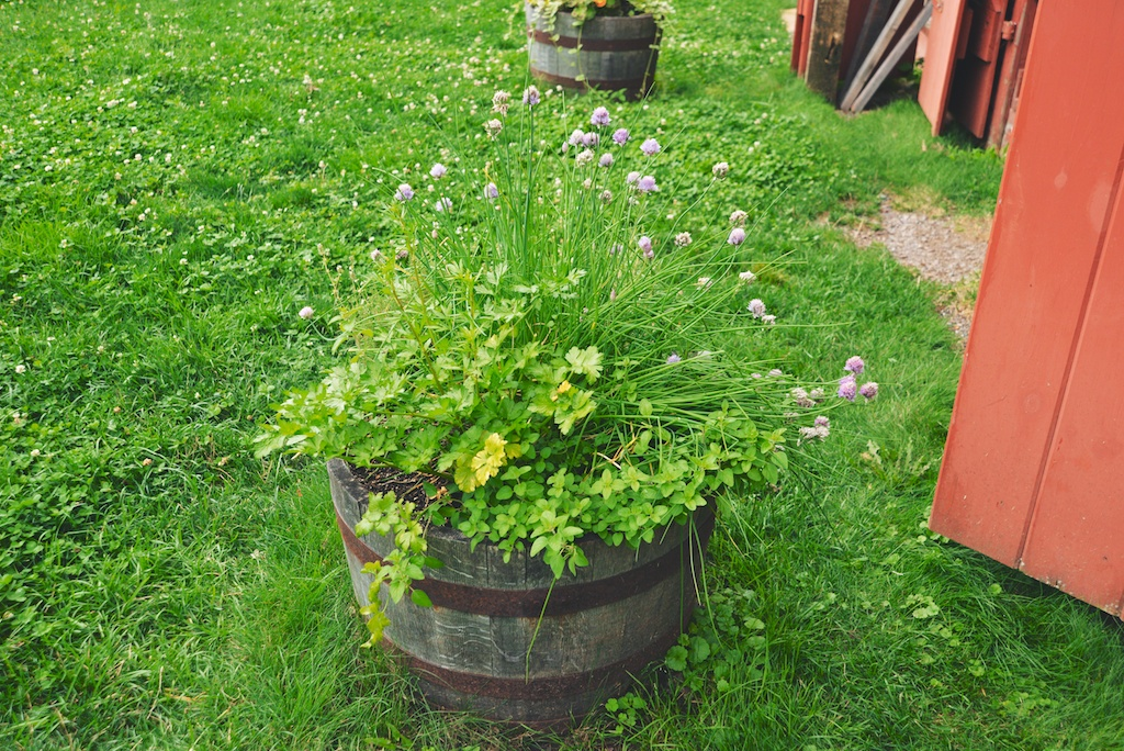 a planter full of herbs at Kinderhook Farm