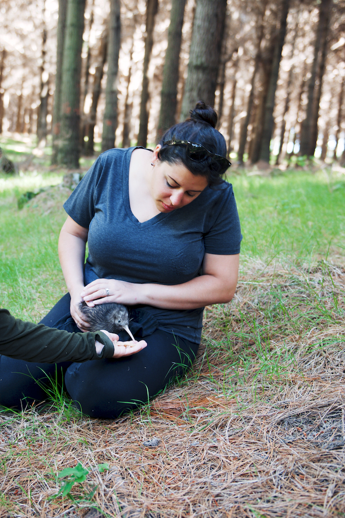 The Farm at Cape Kidnappers, Hawke's Bay, feeding a baby kiwi