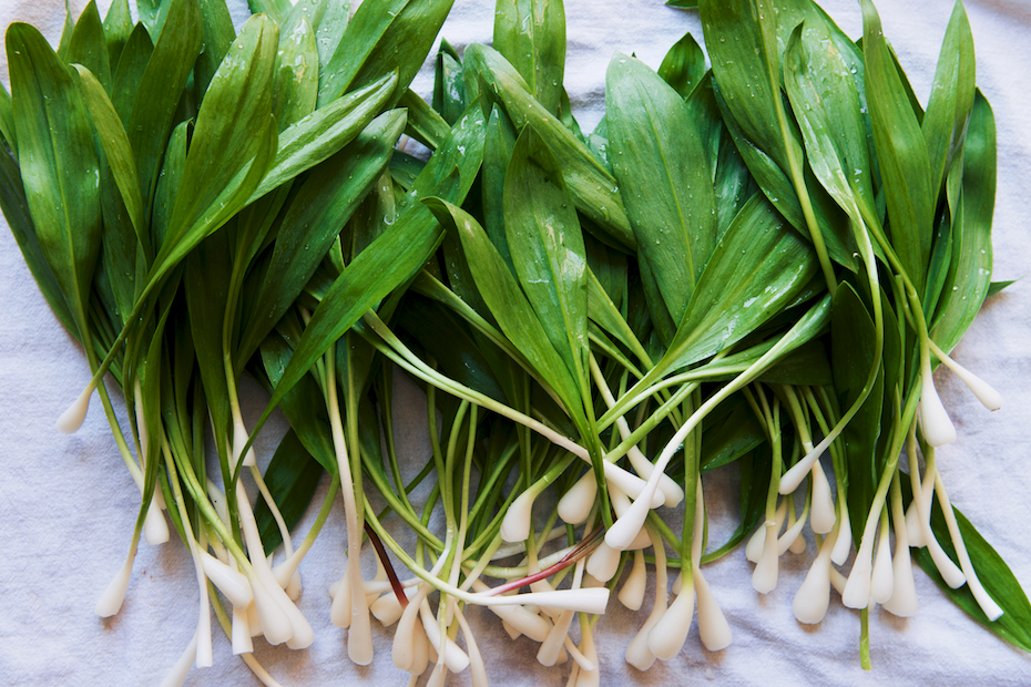 Ramp Foraging + Ramp Risotto
